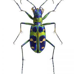 Poster Flerfarget Insekt 50x70