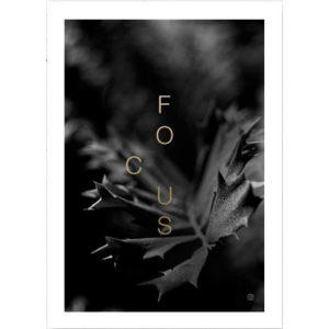 msHay FOCUS plakat 50x70