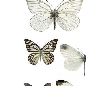Plakat Collage Sort Hvitt Sommerfugler A4