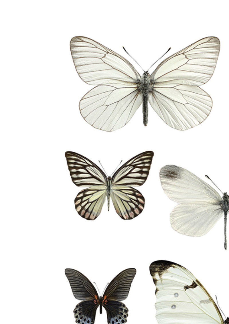 324b4ef2 Collage sort hvitt sommerfugler A4 - UMA Interiør - Moderne ...