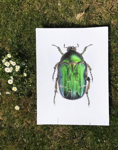 grønn bille